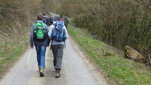 stappers op een verharde weg door het bos